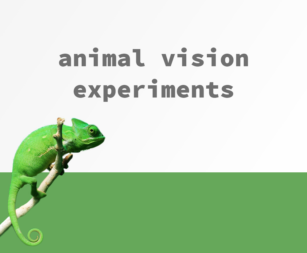 4. Animal Vision Experiments